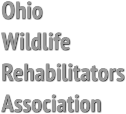 Ohio 
